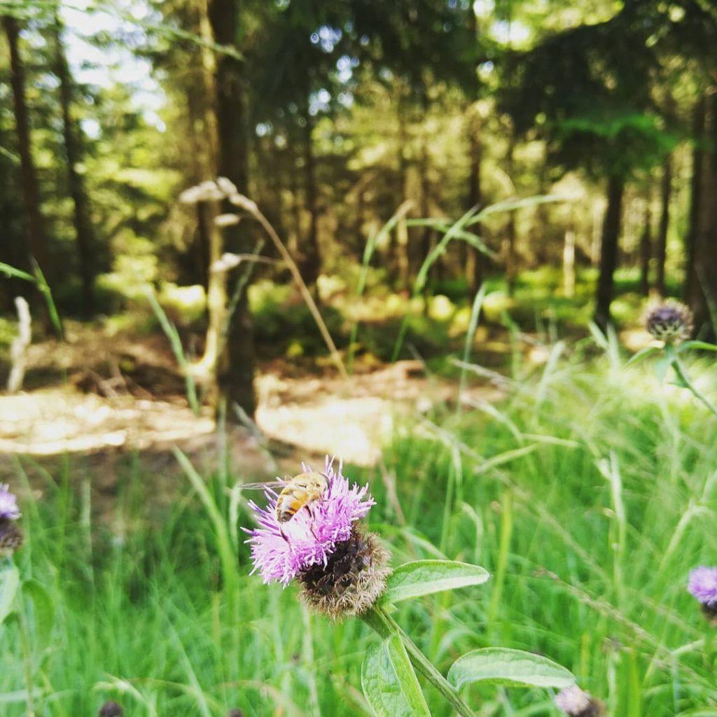 Ecologisch MAGIS-midweek in de Ardennen 2